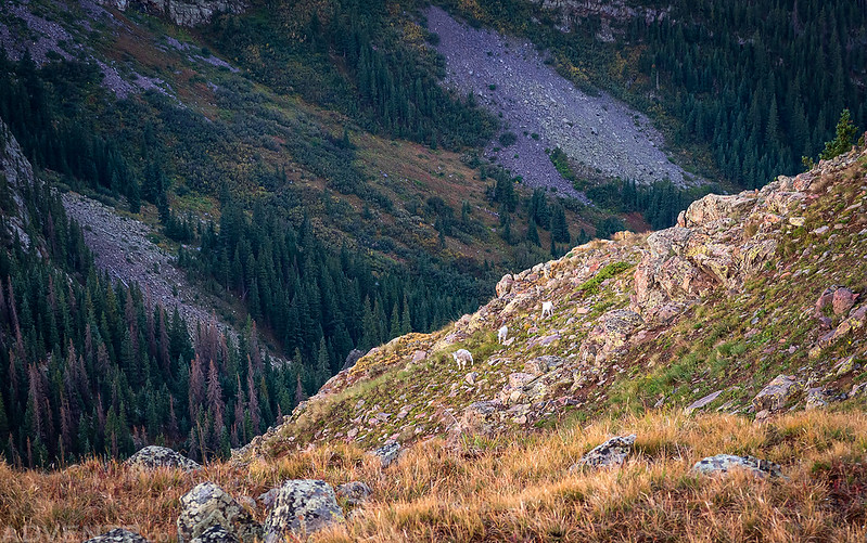 Mountain Goats Far Below