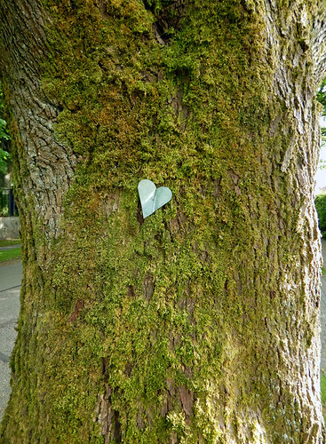Tree with a tiny metal heart