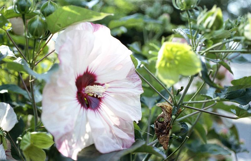 Flower Close Up Lee Avenue