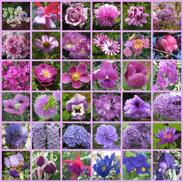 A Bouquet of Purple