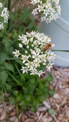 Pollinator Plot