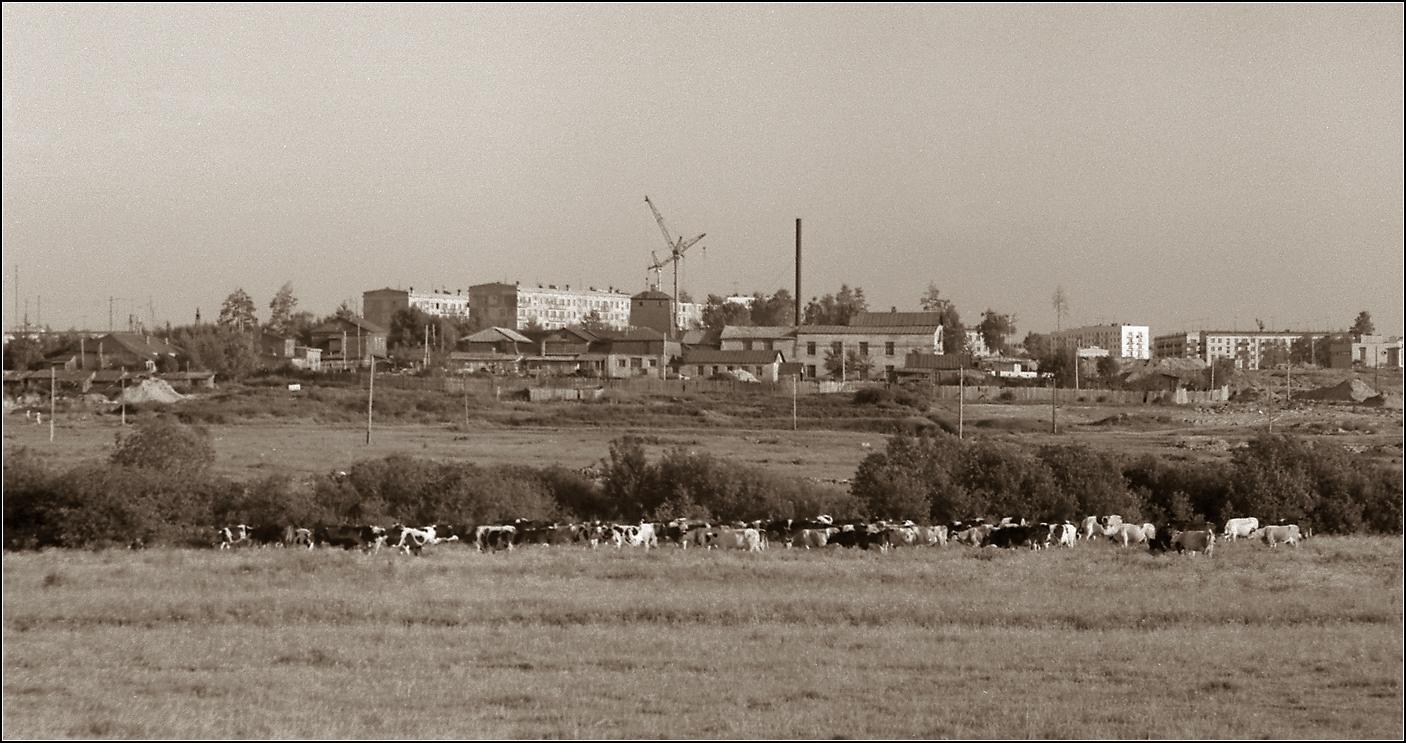 79. 1964. Вид в сторону 13–15 Парковых улиц. На переднем плане — Кожзавод