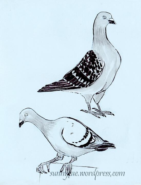 pigeon sketch 1