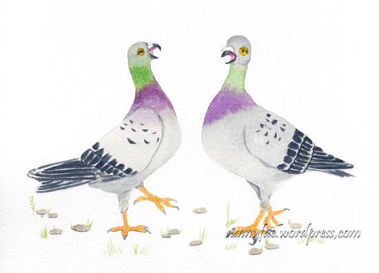 pigeon chat