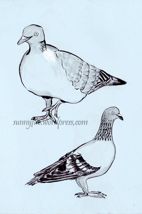 pigeon sketch 2