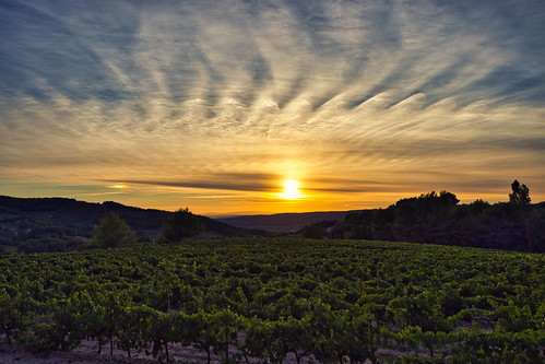 sunset over the vines before the harvest | by jeromedelaunay_paris