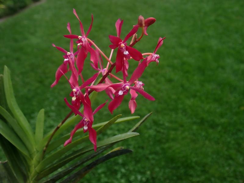 Les Orchidées chez Cloo en 2020 - Page 20 50315098723_ffbaeac8bb_o
