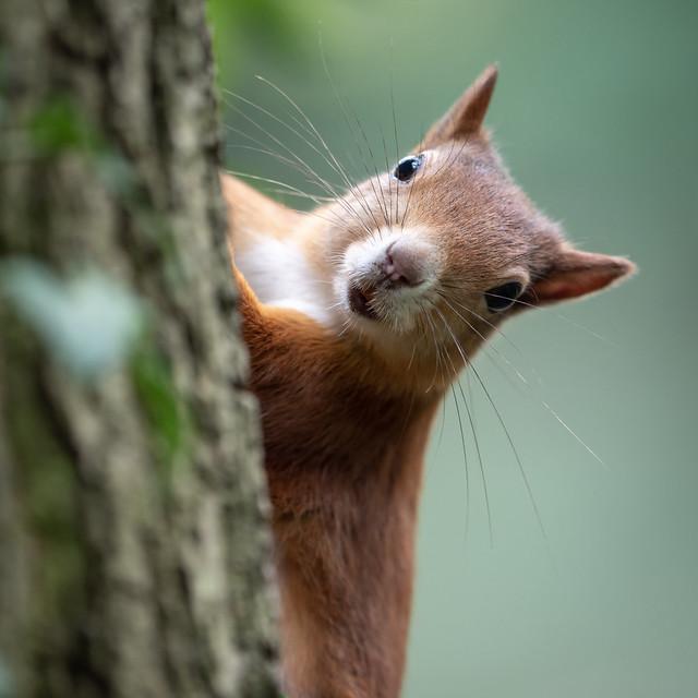 Hello! Nuts?