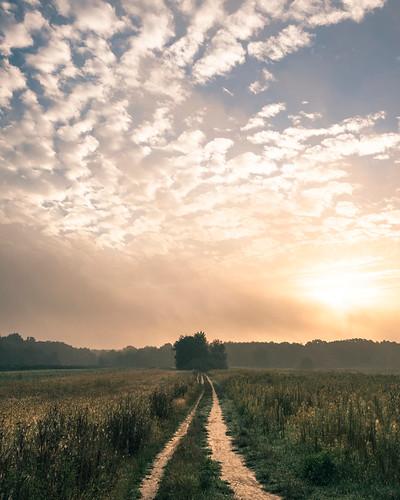 mazovia poland meadow trees flora morning sunrise clouds fog mist summer landscape nature travel outdoors rural