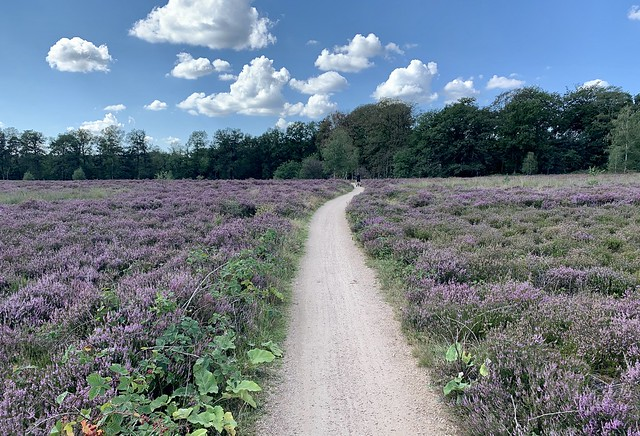Nationaal Park De Hoge Veluwe (Gelderland, The Netherlands 2020)
