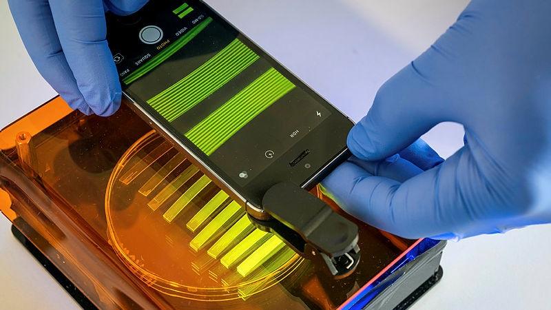 研究一种利用智能手机技术检测大肠杆菌存在的技术.