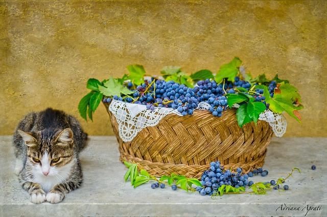 Still life con micia rassegnata. Still life with resigned cat