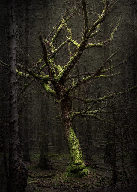 Witchcraft Tree