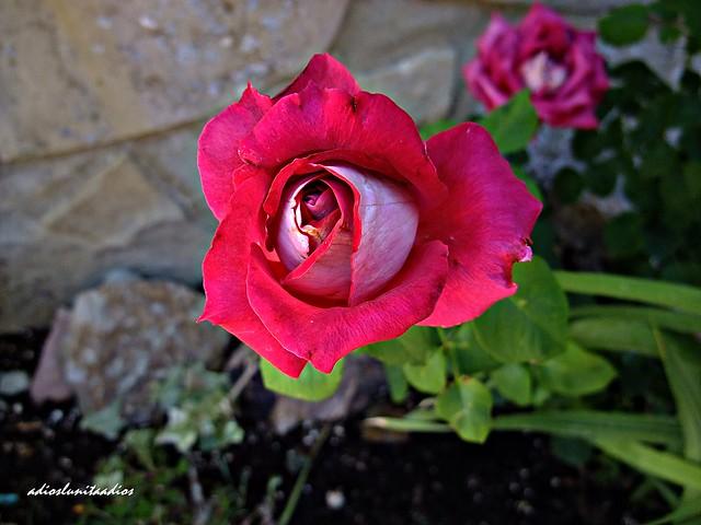 Matices en rosa 030