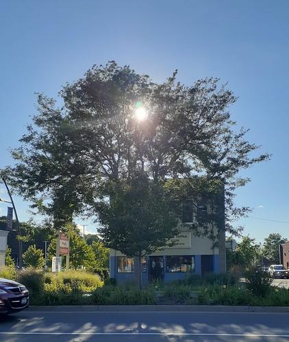 sunset sundown sun tree olean ny