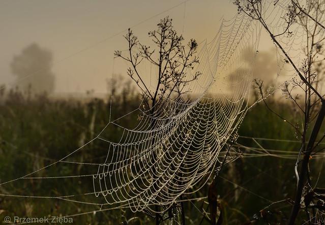 Web..