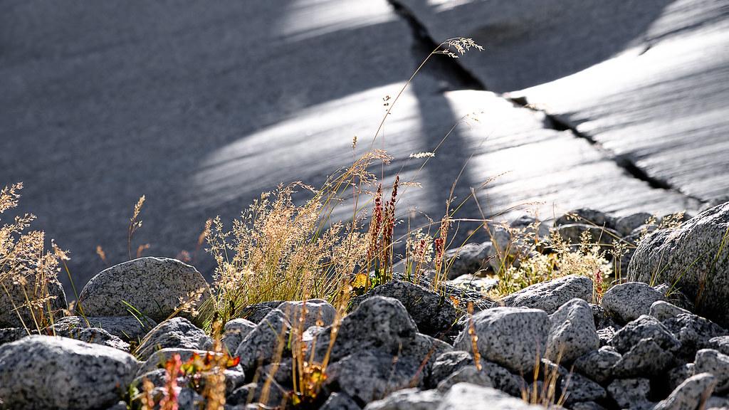 Vegetation close to the Glacier
