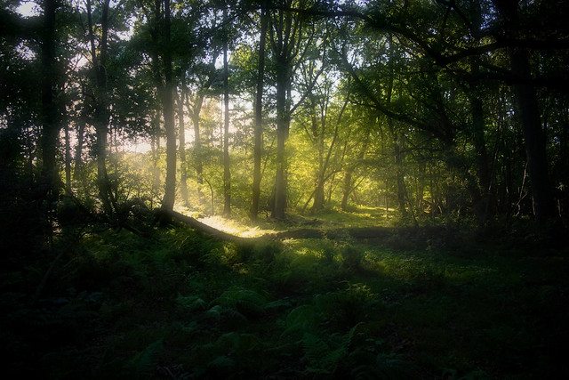 Mystical Forest [Explored🌟]