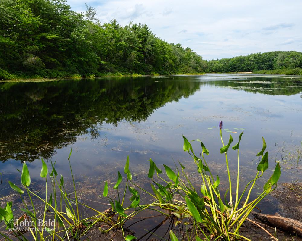 Long Pond, Ferry Beach SP, Saco, Maine  (90012)