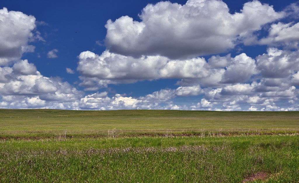 Prairie Grasses under Skies of Blue
