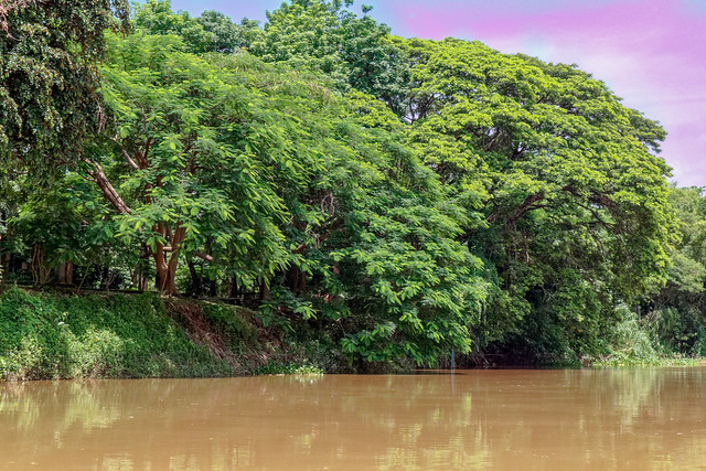 Boat trip Mae Ping river cruises - Chiang mai (22 sur 108)
