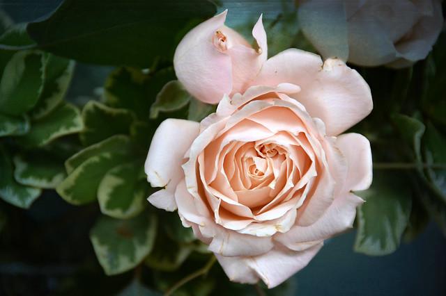 petal perfect
