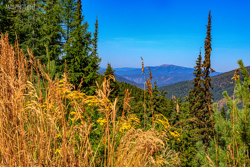 park blue brown mountain black green beautiful grass horizontal forest landscape gold colorful day bright outdoor idaho idahonationalforest summer plants tree yellow pine woods tan peaceful sunny trail valley spruce thompsonpasstrailhead