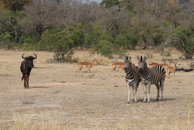 Kruger Scenes