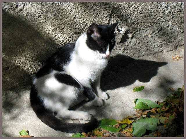 Η οξεία και η σκιά της     Oksia and her shadow