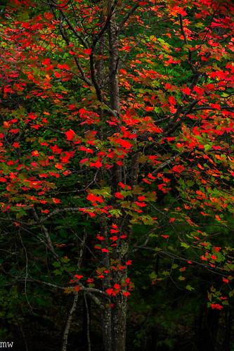 fall foliage mount major nature hiking landscape newhampshire newengland