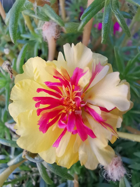 .... the last summer blooms ....