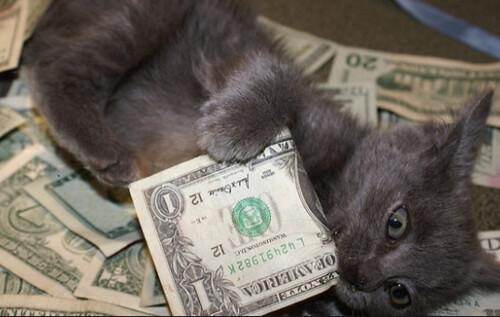 Kitty paying back