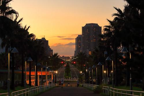 urayasu city japan sunset sky tree trees