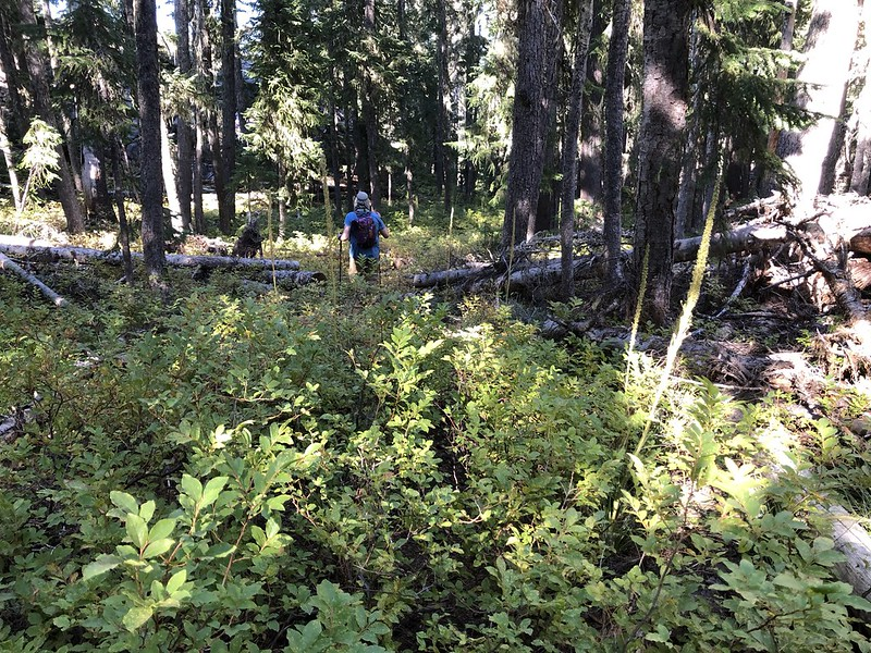 Brushy McBee Trail
