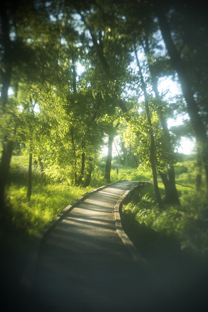 Green Boardwalk