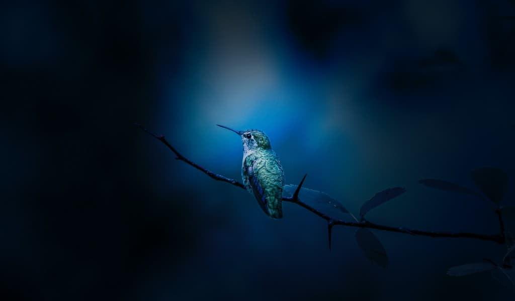 les-colibris-peuvent-abaisser-leur-température-de-4-degrés-celsius