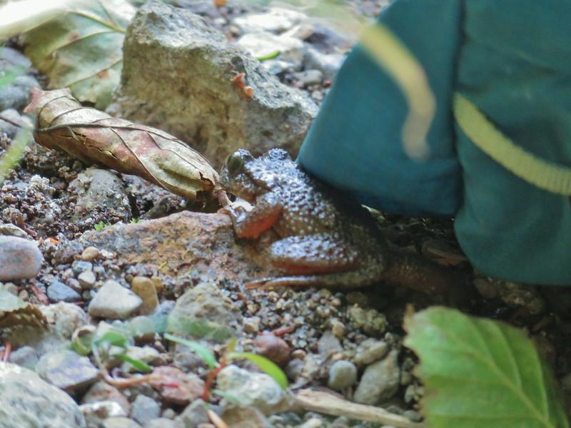 Frog under Heather's daypack