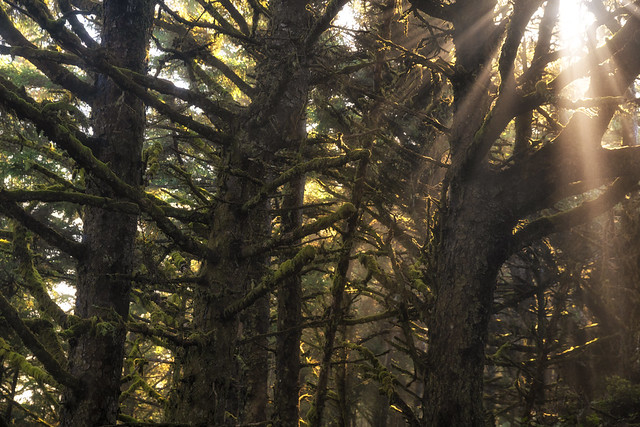 Cape Lookout Forest