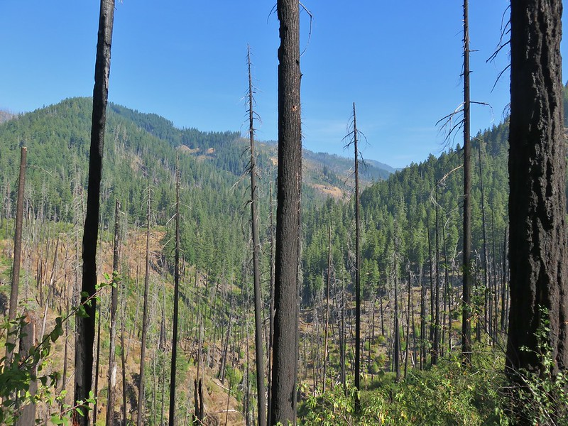 Looking up the Boulder Creek Valley