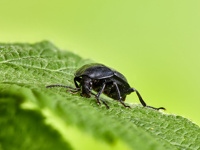 A beetle in the Cerambycidae family