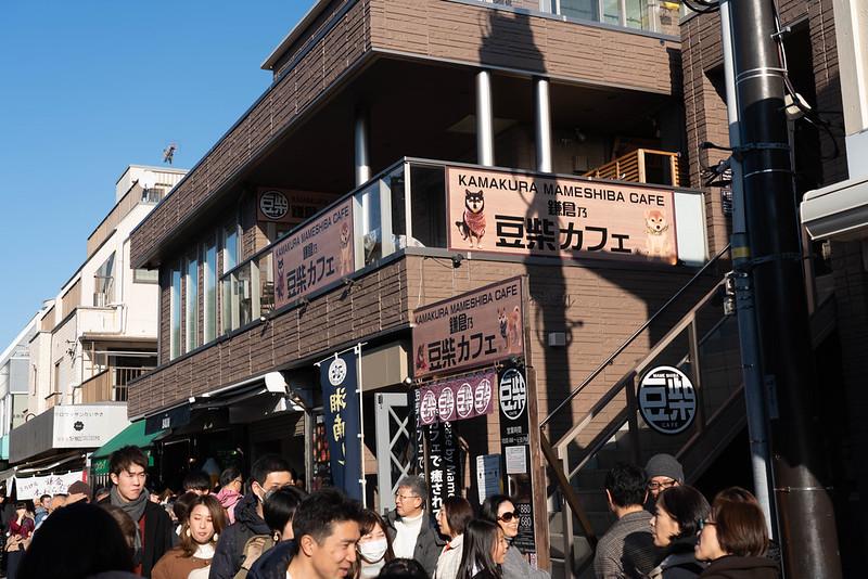 鎌倉の豆柴カフェ