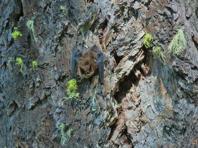Bat at Wiley Camp