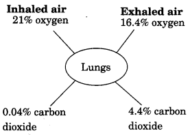 Respiration in Organisms Class 7 Extra Questions and Answers Science Chapter 10 3