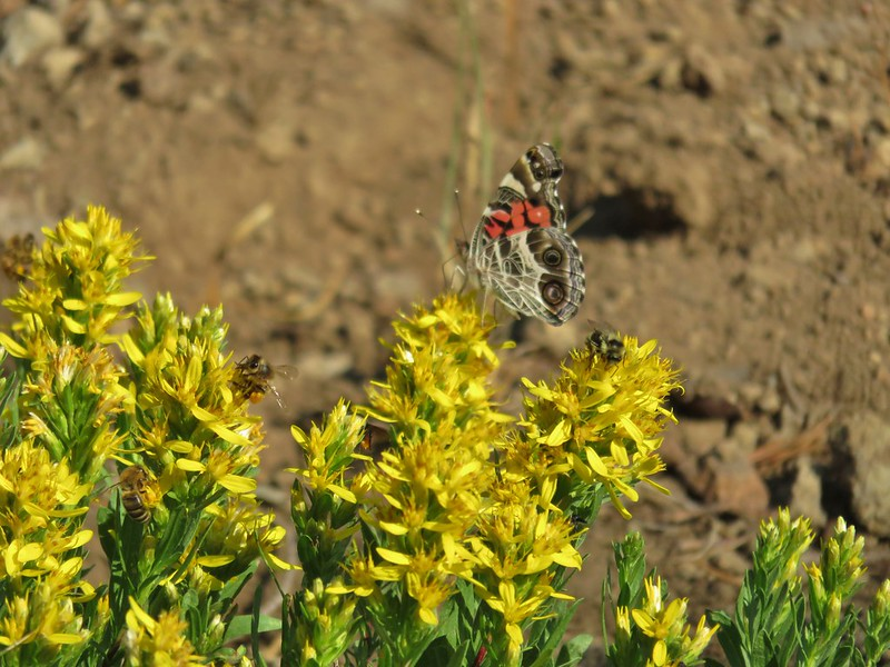 Butterflies and bees on wildflowers