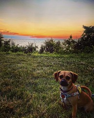 Penny enjoying the sunset at Lake Erie Bluffs in Perry, OH. Photo taken July 11, 2020.