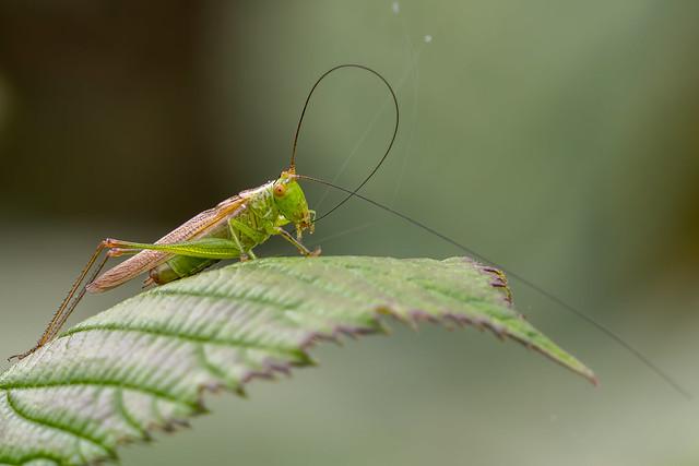Cricket.........