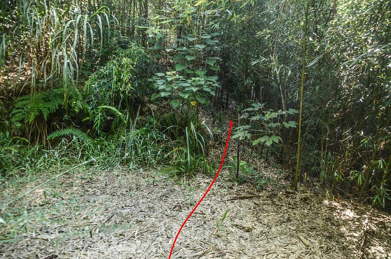 南勢山東南峰產道終點入切竹林處