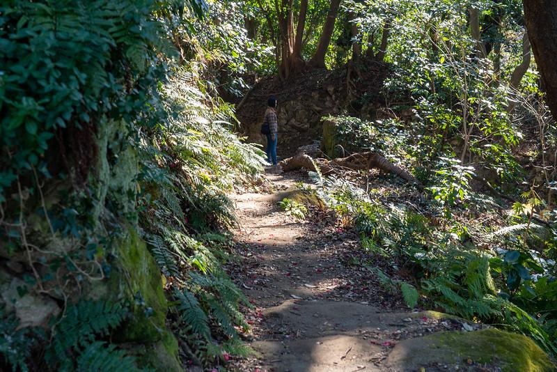 衣張山の登山道