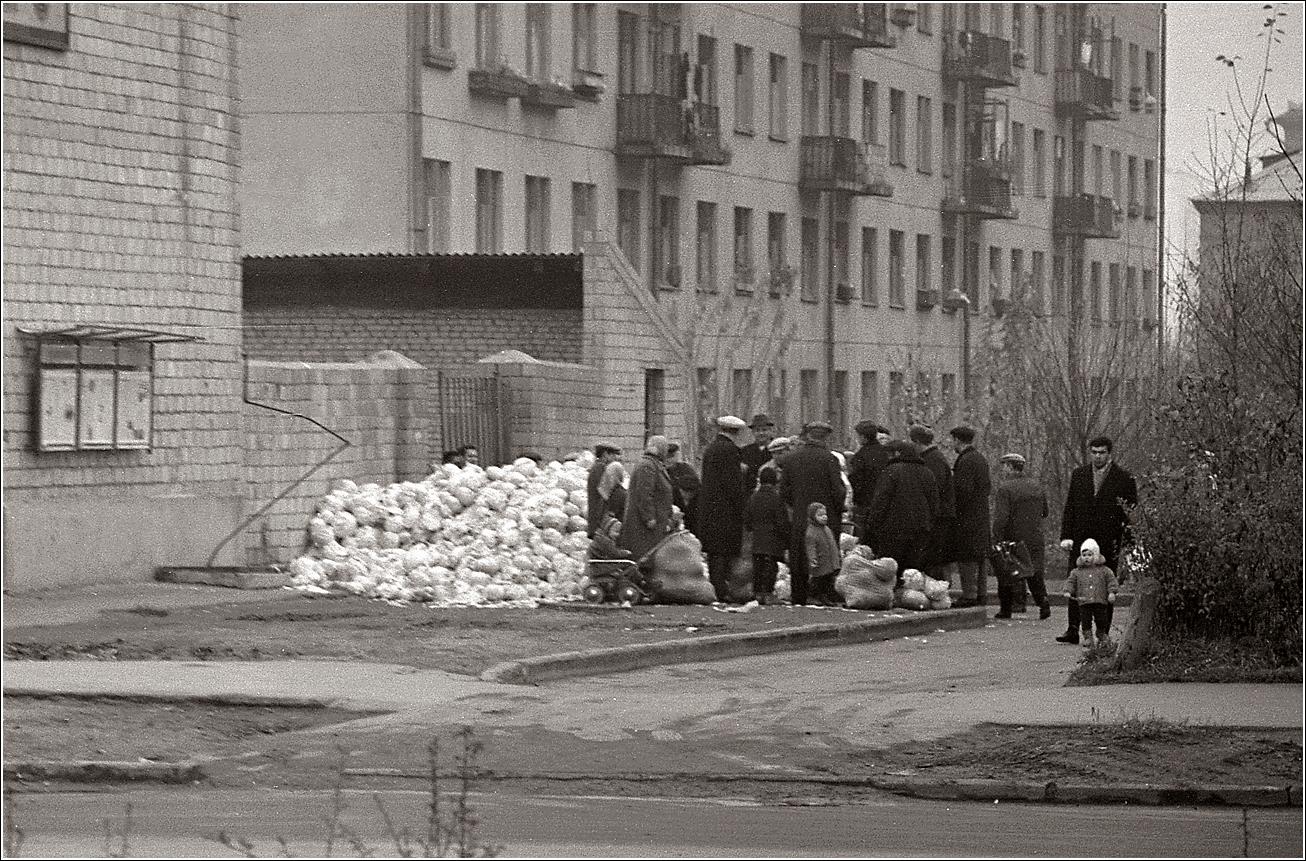 104. 1967. Сиреневый бульвар. Продажа капусты 29.10.
