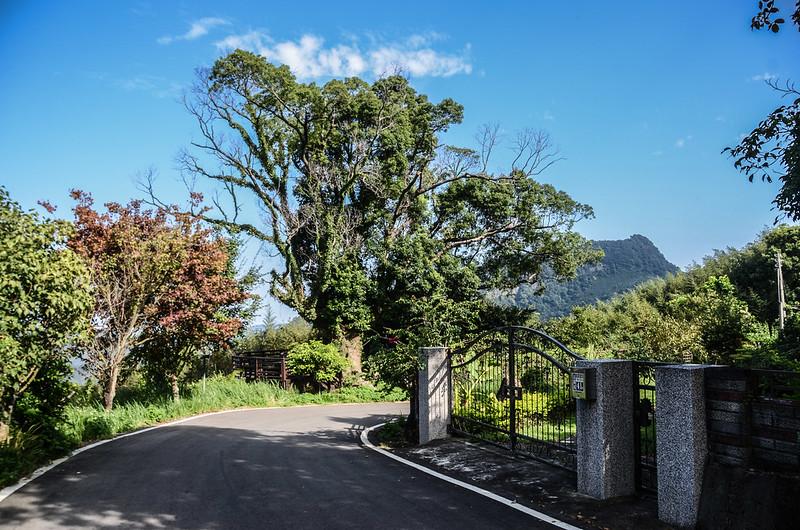 大樟樹觀景台 (1)